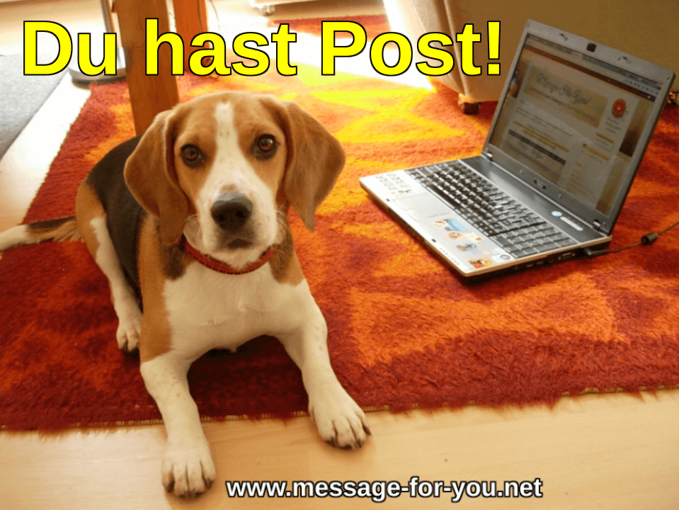 Beagle Hund sagt Du hast Post