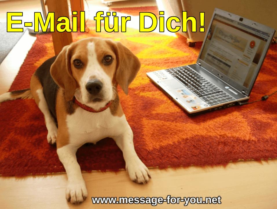 Beagle Hund sagt E-Mail fuer Dich