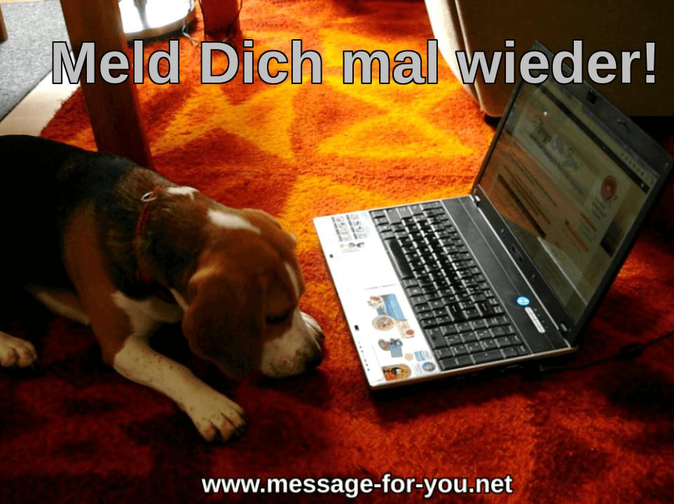 Beagle Hund sagt Meld Dich mal wieder