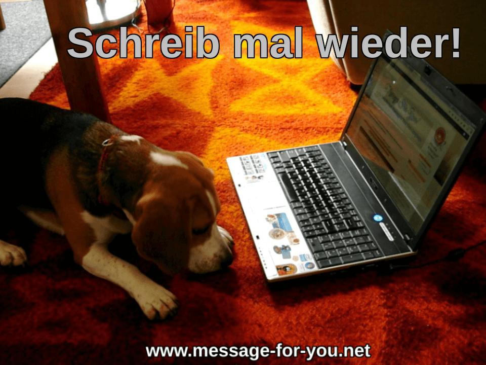 Beagle Hund sagt Schreib mal wieder