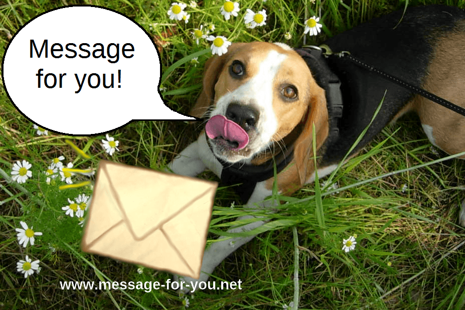 Beagle with Letter Flowers-MFY-2