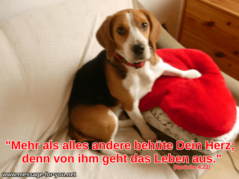 Behuete Dein Herz Beagle Hund