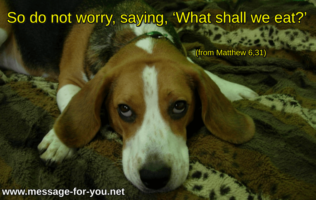 Do not worry Beagle