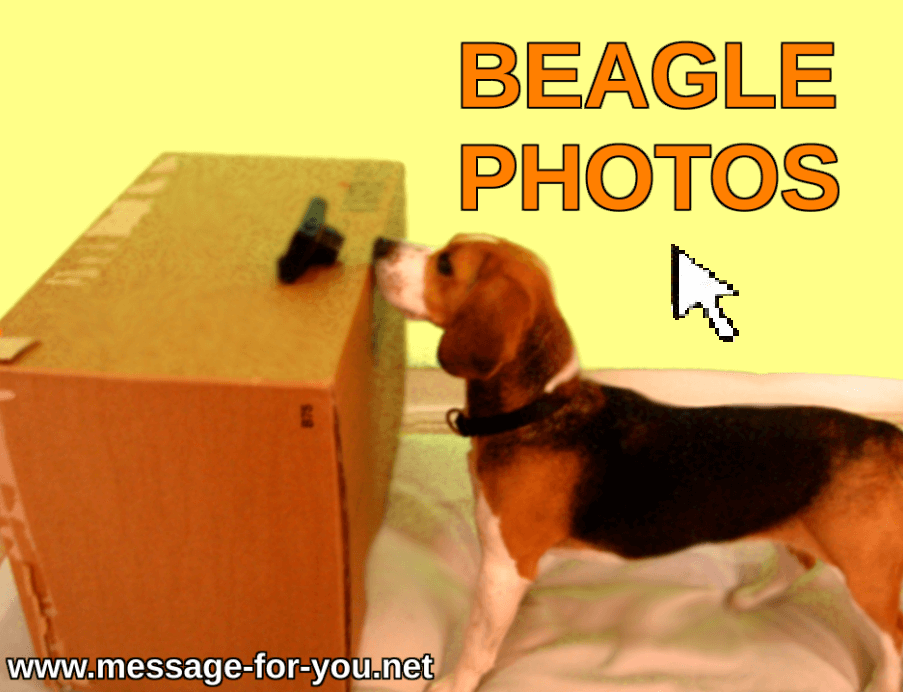To the Beagle Photos - Dog Pictures
