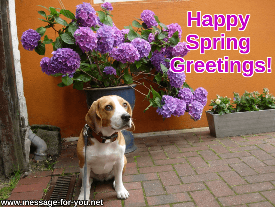 Happy Spring Greetings Beagle Dog