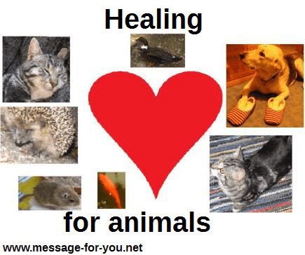 Healing For Animals Pets