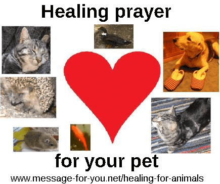 Healing prayer for pets animals