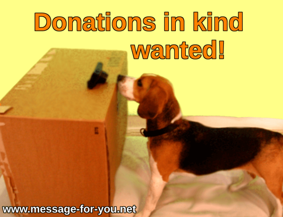 In-kind Donations Beagle Dog