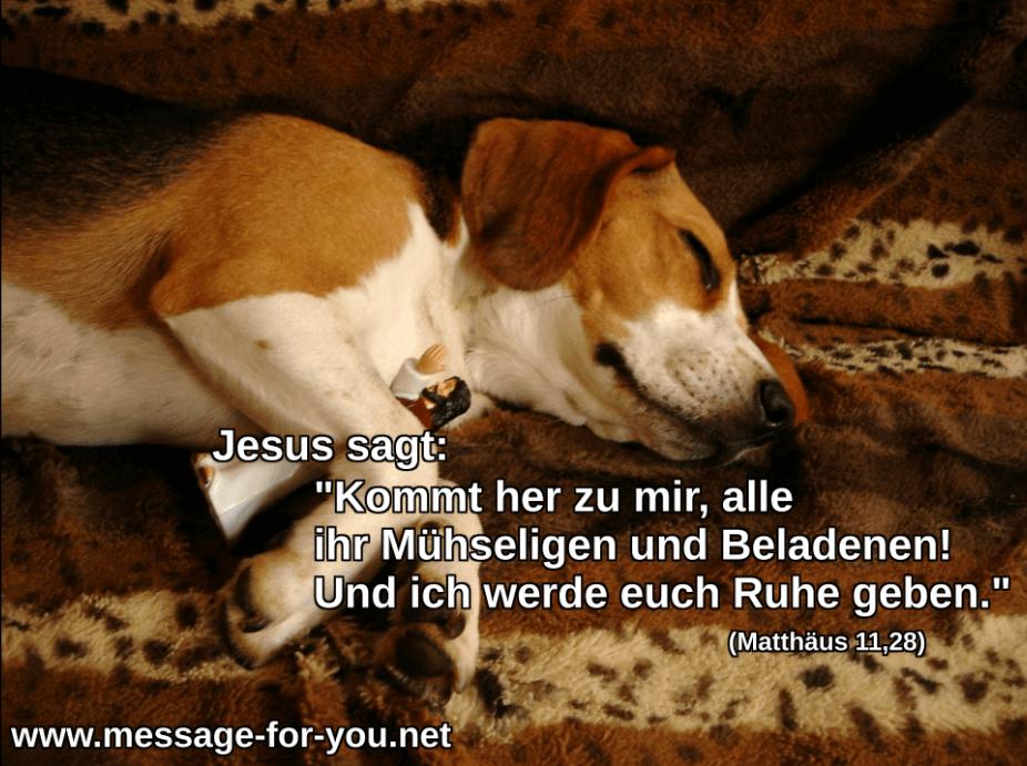 Jesus Action Figur Beagle Hund Katze