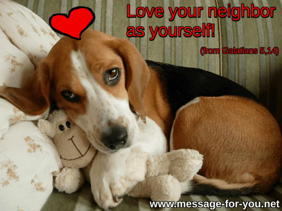Love your neighbor Beagle