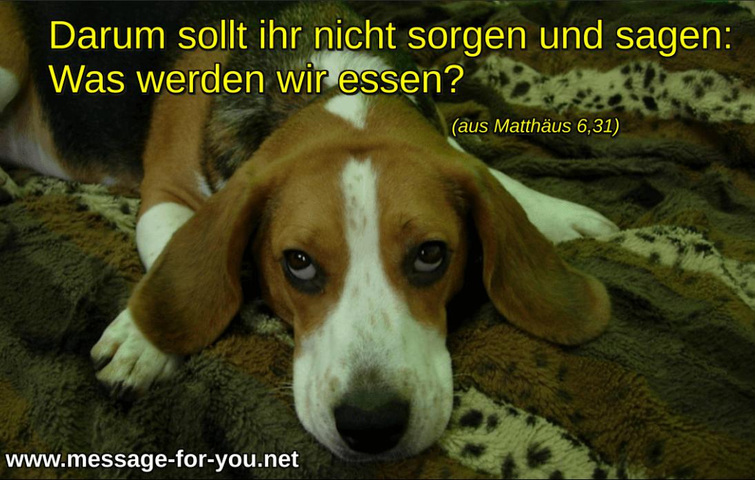 Mach Dir keine Sorgen Beagle