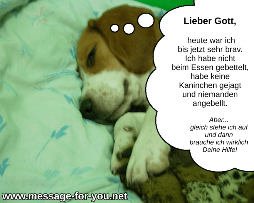 Morgengebet Beagle Lustig