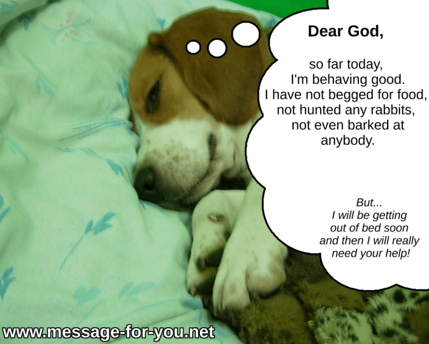 Morning Prayer Beagle Funny