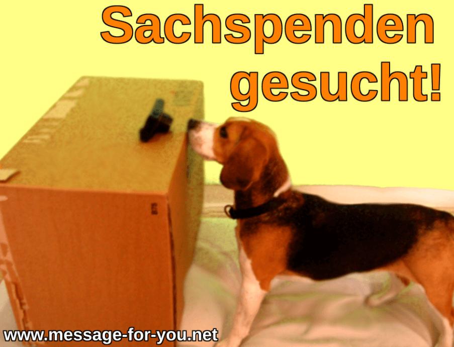 Sachspenden Guter Zweck Beagle Hund