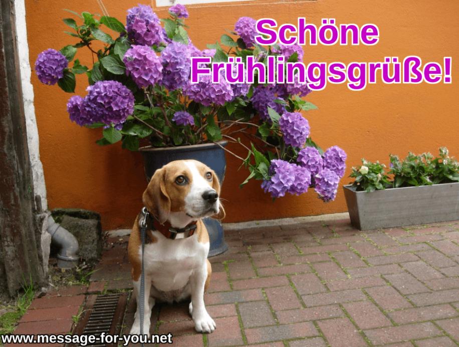 Schoene Fruehlingsgruesse Beagle Hund