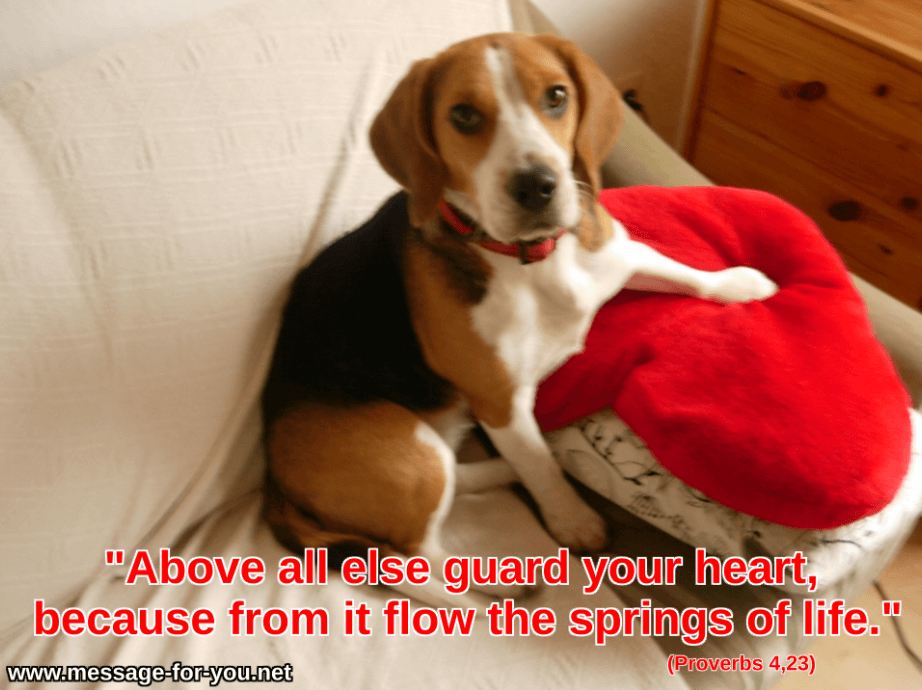 Take Care Of Your Heart Beagle Dog